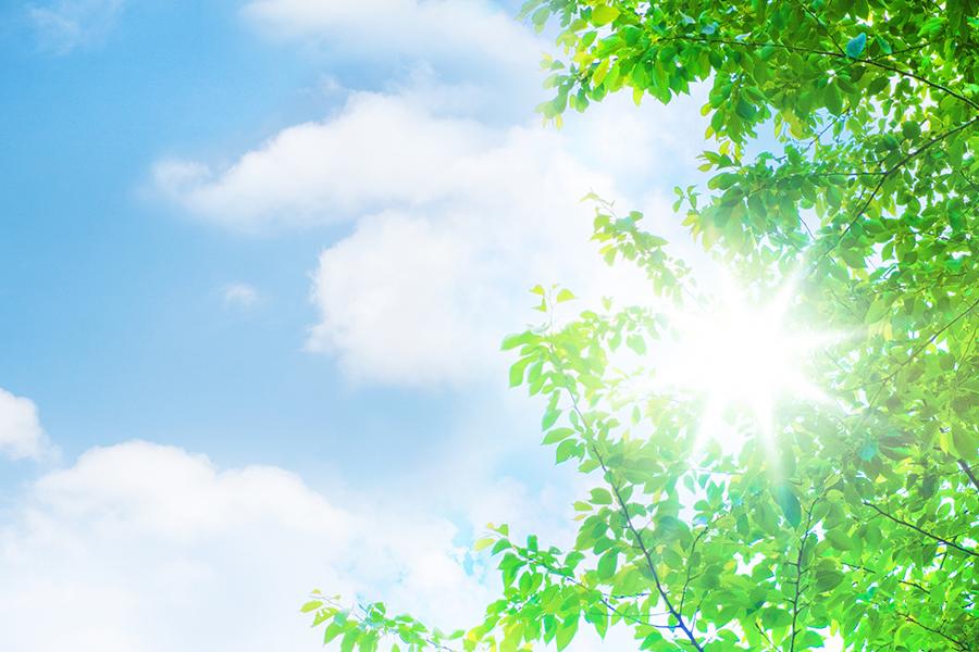初夏の青空と緑の木々